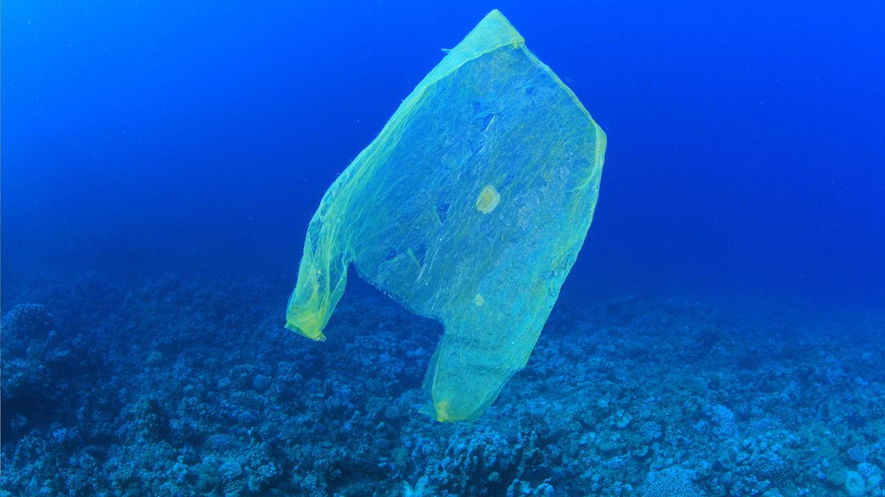 Oportunidad de fondos para organizaciones sin fines de lucro que luchan contra los desechos marinos