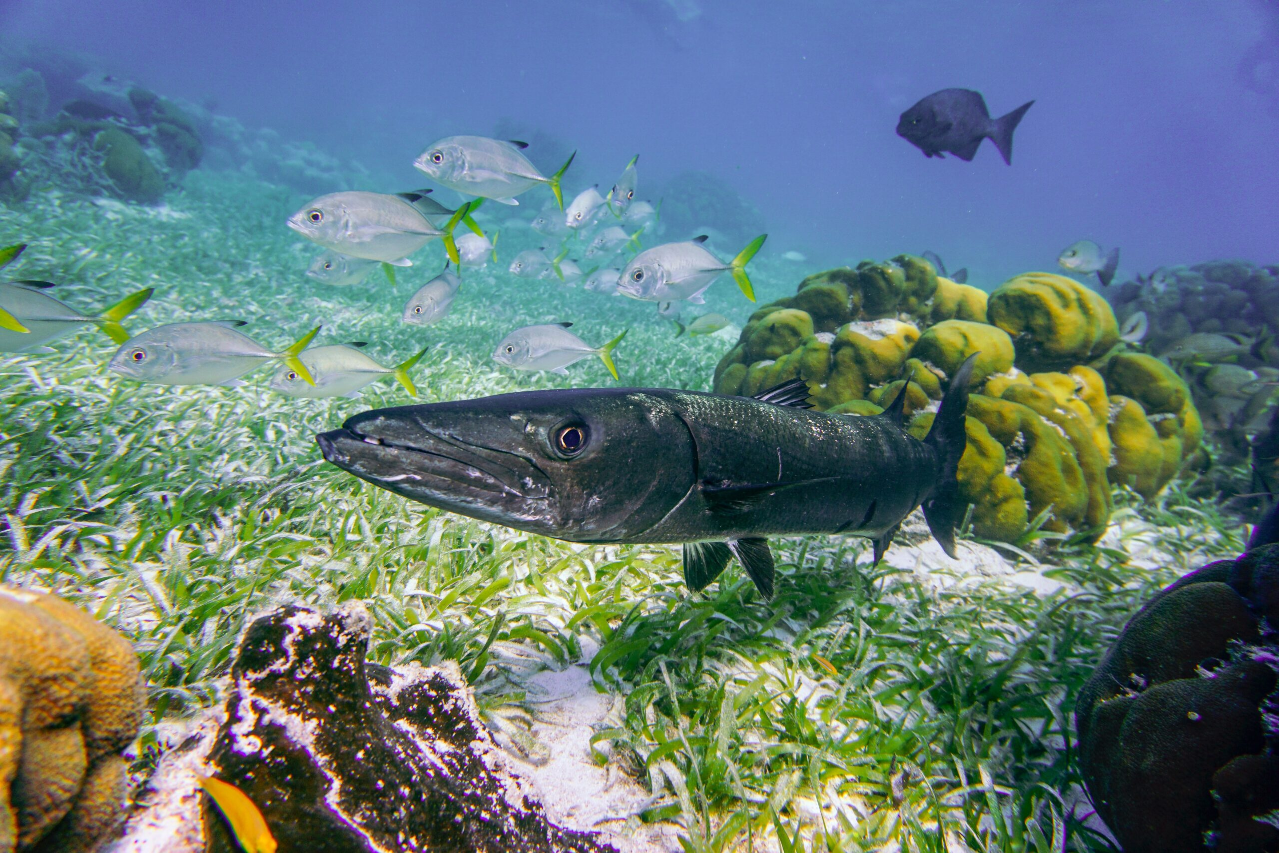 5 Ocean-Friendly Actions to Take This Year