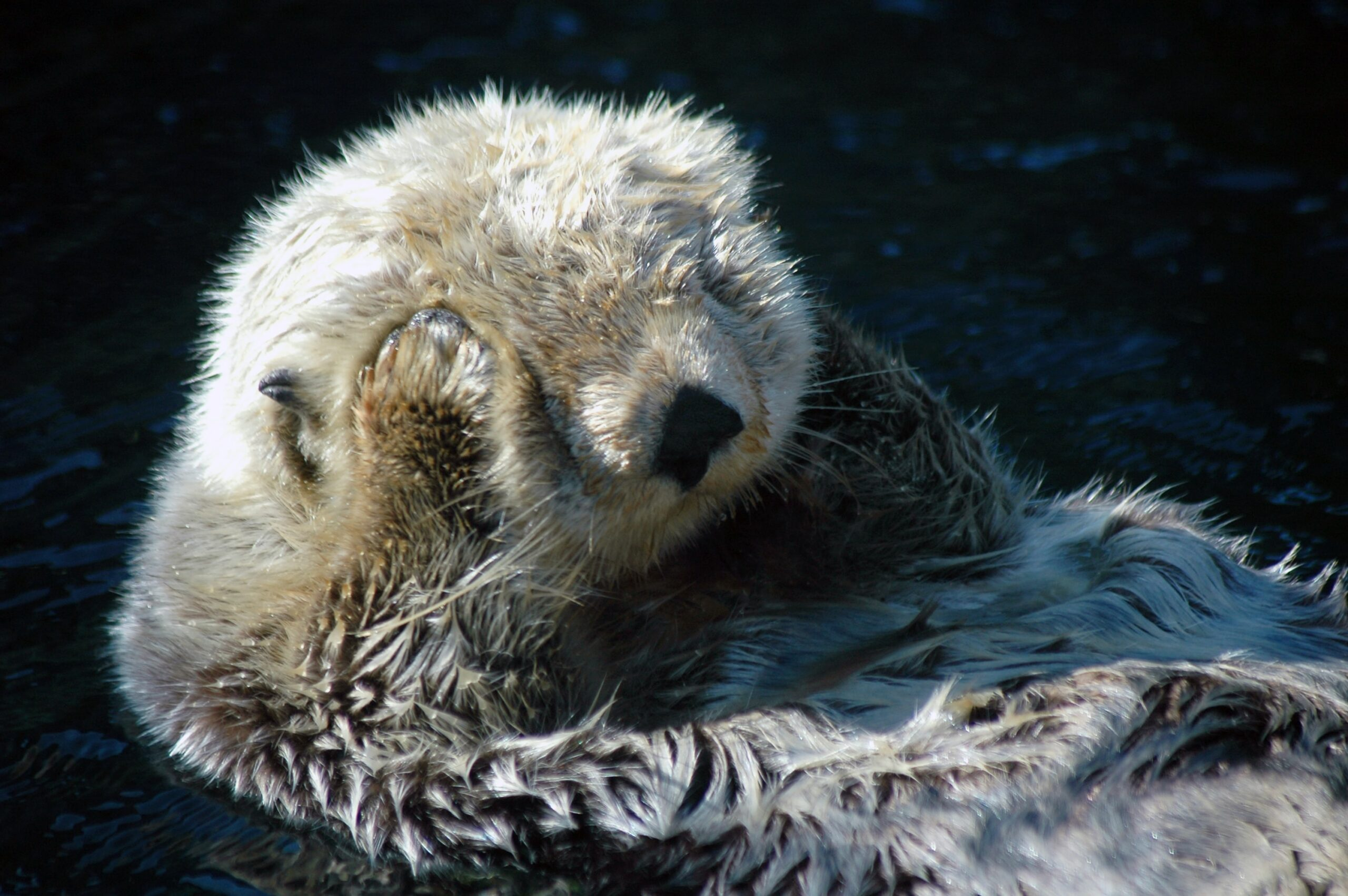 Lawsuit Challenges Federal Failure to Update Marine Mammal Assessments