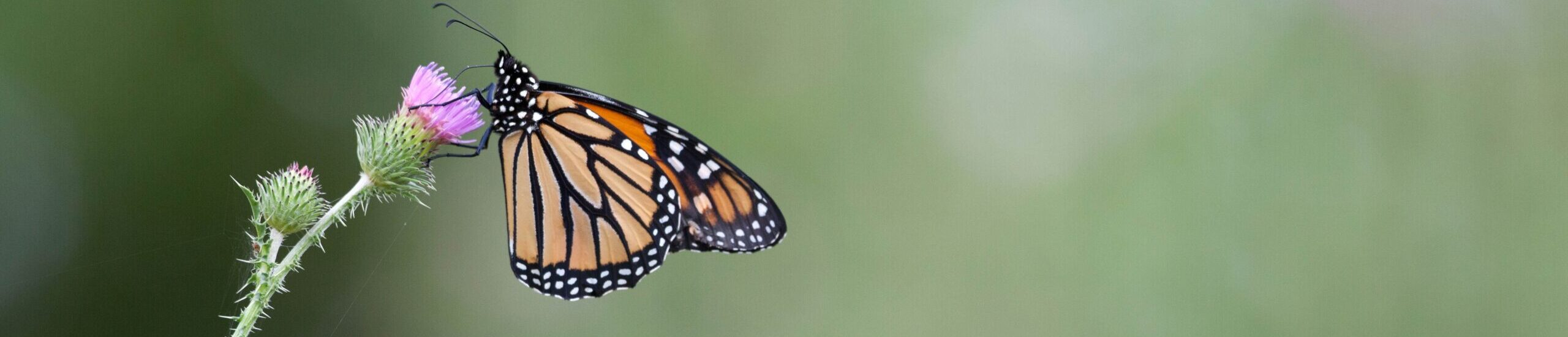 TIRN Calls On Congress to Provide $100 Million Annually for Conservation of Monarch Butterflies