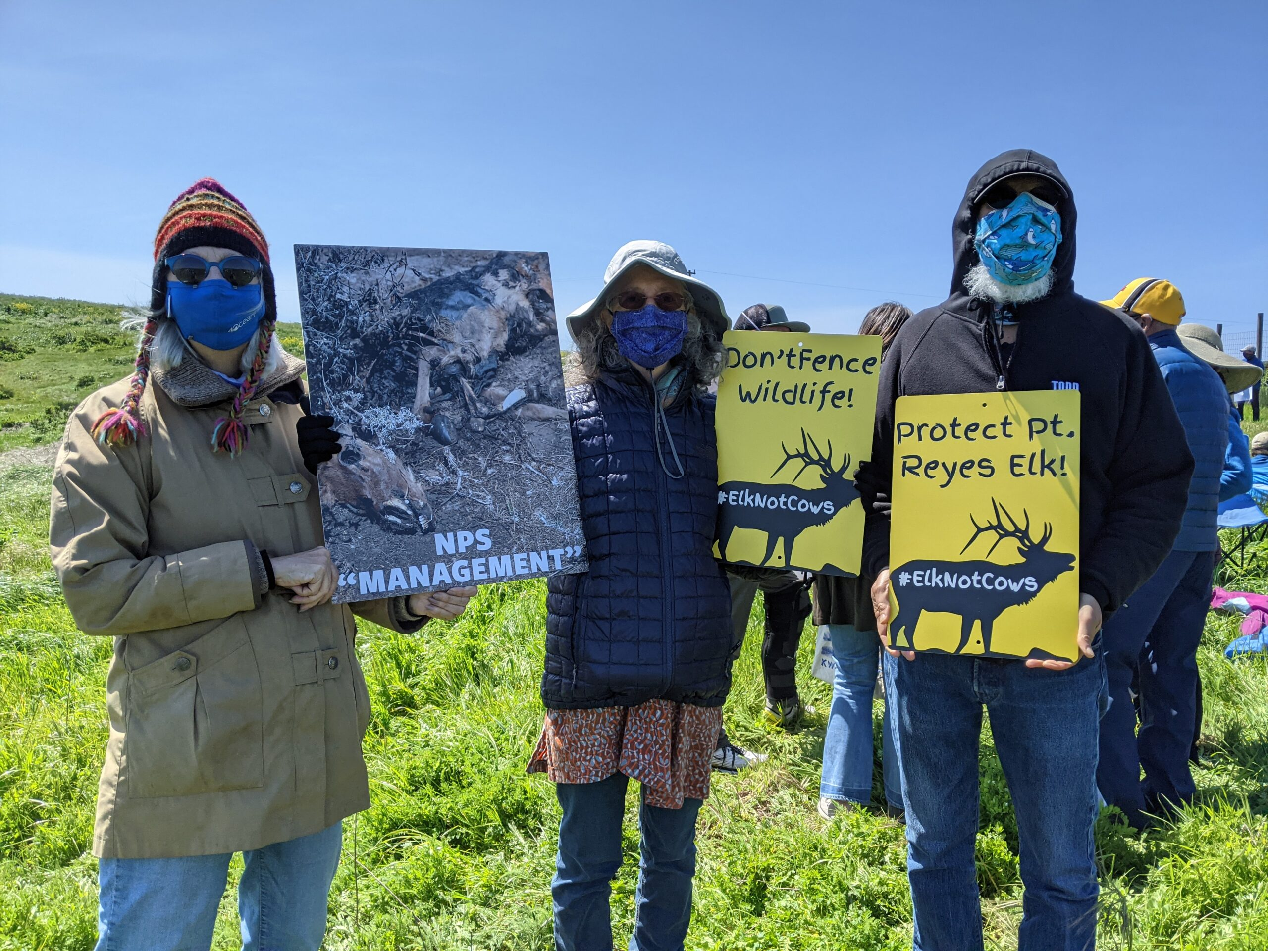 Print Your Own Protest Signs to Save California's Tule Elk!