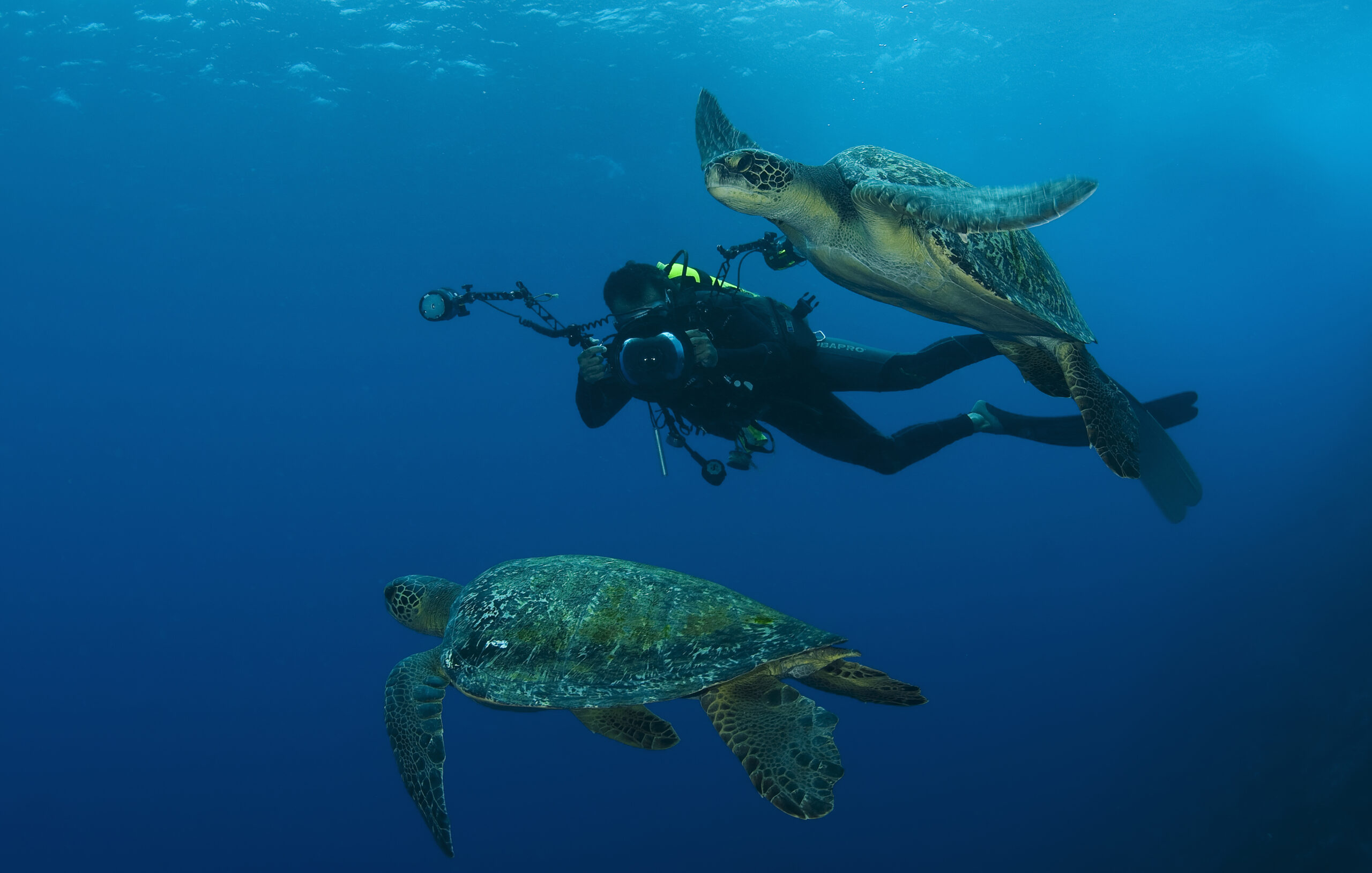 """Citizen Divers Enlisted in Conservation Study of Sea Turtles And Sharks at Cocos Island National Park, the """"Most Beautiful Island in the World"""""""