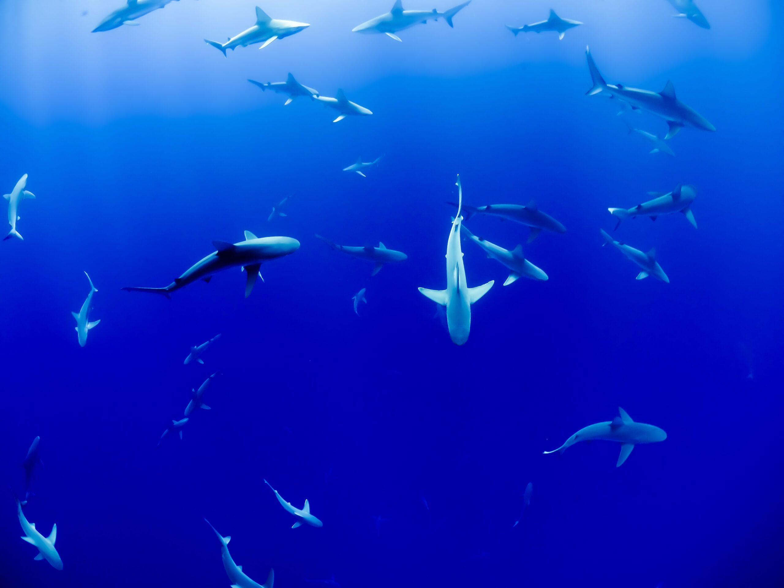 Dozens of Costa Rica Shark Species Designated as 'Endangered'