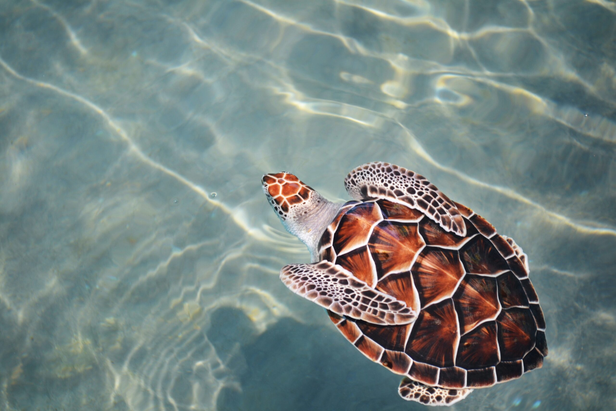 More Than 1,000 Loggerhead Sea Turtles Died in Mexico in 2020