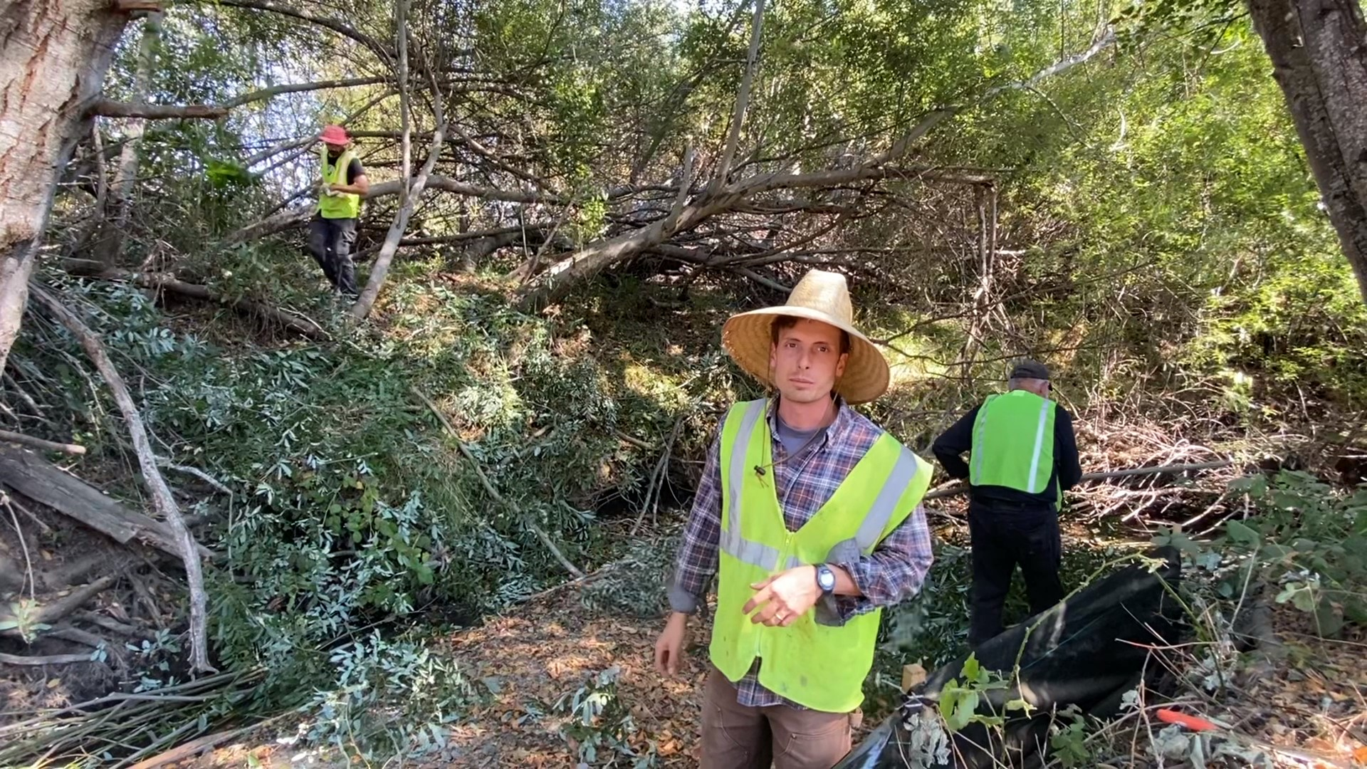 SPAWN Harvests Over 1,000 Willow Cuttings
