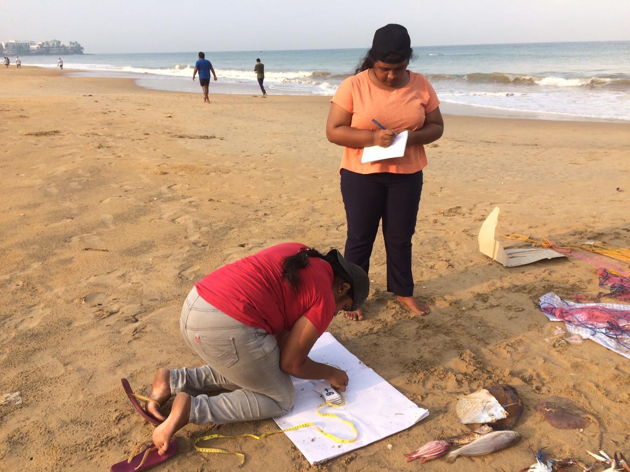 Sri Lankan Nonprofit Awarded Funding to Protect Sharks
