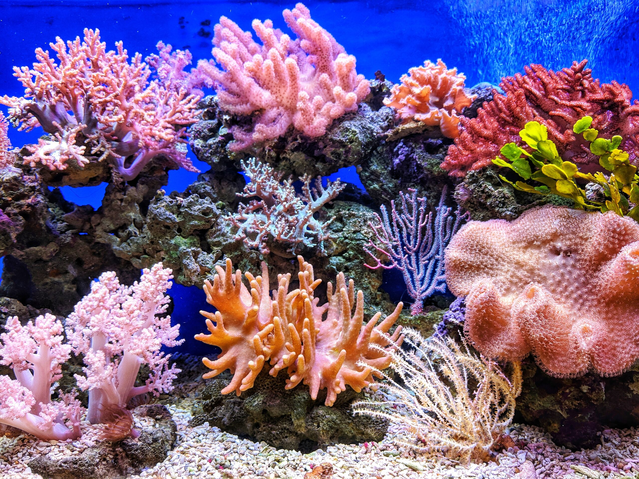 Climate Change Killed 14% of the World's Coral Reefs in Last Decade